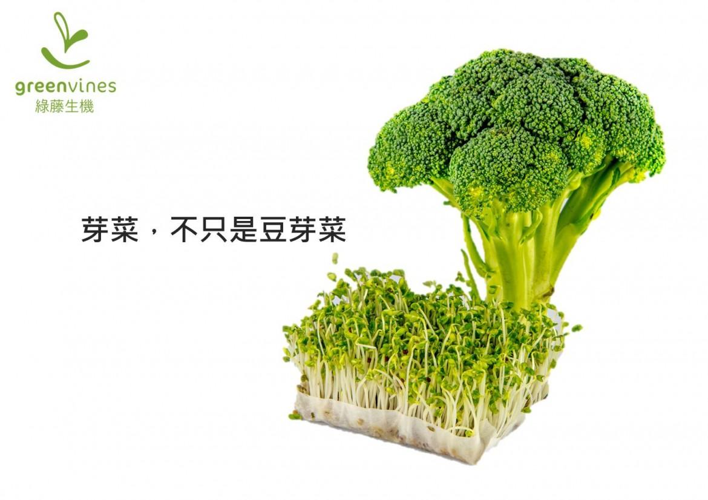 芽菜不只是豆芽菜