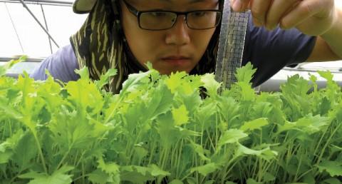 綠藤寶貝沙拉菜