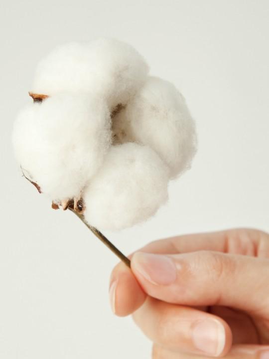 cotton-02