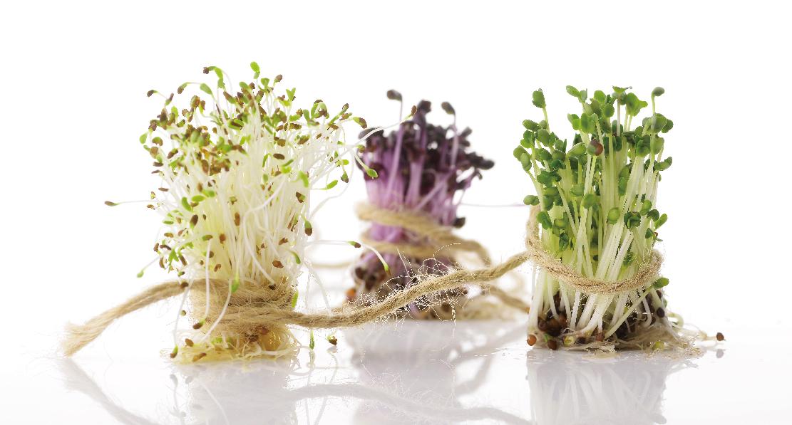 芽菜是豐富且高品質的多樣植化素來源,生食才能完整攝取