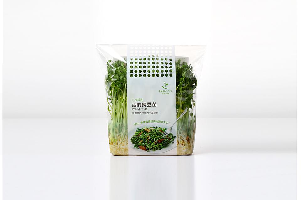 豌豆苗22