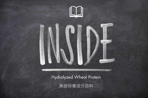 blog-wiki-Hydrolyzed-Wheat-Protein