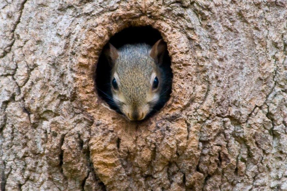 rsz_squirrel-in-tree-1