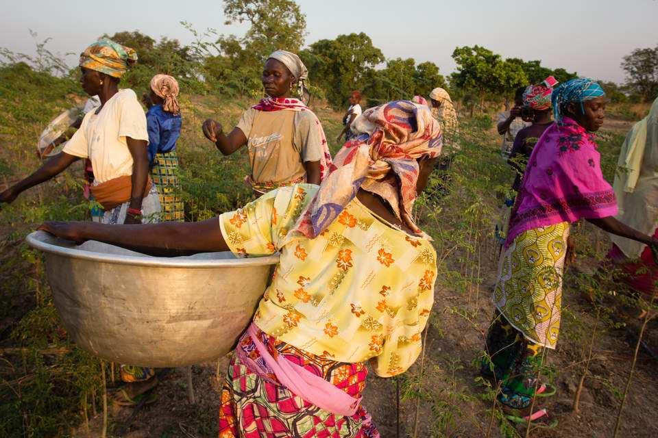 這樣的機制能大幅吸引迦納農民加入改變的行列,並有機會讓更多人認識這樣的好產品。