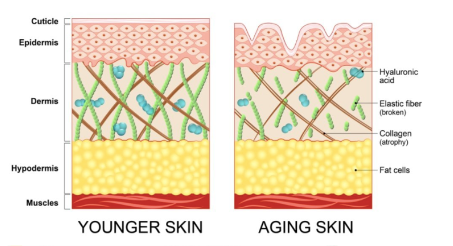 young and old skin comparison