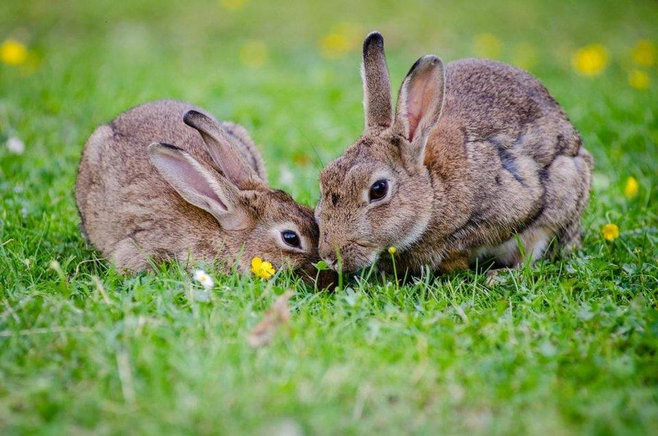 rsz_animals-bunnies-bunny-33152