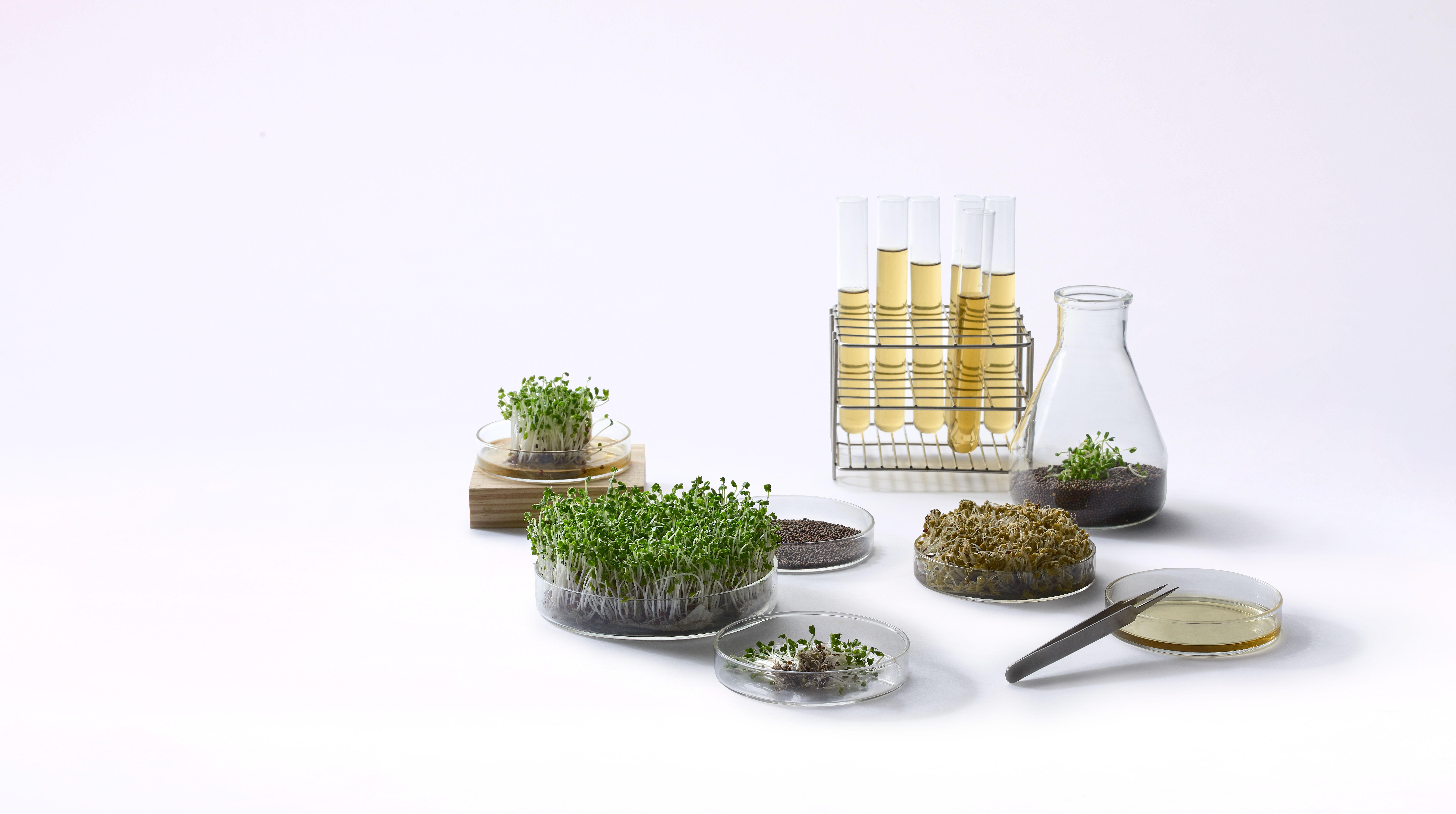 圖說二:獨家技術超越業界植萃,世紀百大抗老發現「活萃青花椰苗」,來自台灣的國際保養成分